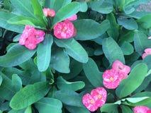 与长的叶子的小的桃红色花 库存照片