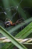 与长的爪子的蜘蛛 免版税库存图片