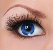 与长的睫毛的眼睛。美丽的蓝眼睛 图库摄影