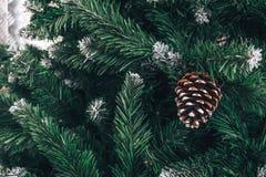 与长的针的杉木分支在与杉木锥体的霜圣诞树,雪 免版税库存照片