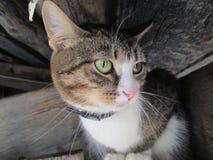 与长的颊须的滑稽的猫 免版税库存照片