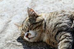 与长的颊须和绿色黄色眼睛放置的大蓬松无家可归的猫室外 免版税库存照片