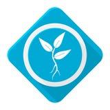 与长的阴影的蓝色象植物新芽 库存照片