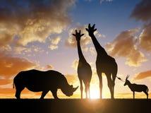 与长颈鹿和羚羊的犀牛在日落 免版税图库摄影