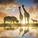 与长颈鹿和羚羊的犀牛在日落 库存图片