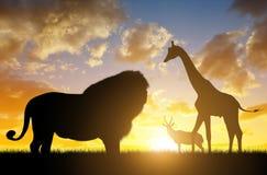 与长颈鹿和羚羊的狮子 免版税图库摄影