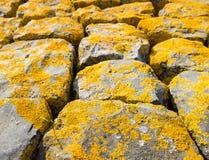 与长满的黄色地衣的玄武岩块 免版税库存图片