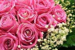 与闪烁的桃红色玫瑰 免版税库存图片