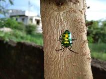 与闪耀的颜色的昆虫 免版税库存照片