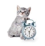与闹钟的可爱的小猫 图库摄影