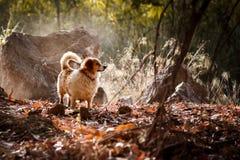 与阳光光芒的白色狗 免版税库存图片