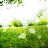 与阳光和Boke的绿色横向背景 免版税库存图片