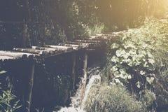 与阳光的供徒步旅行的小道 免版税库存图片