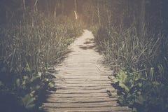 与阳光的供徒步旅行的小道 免版税图库摄影