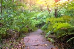 与阳光的深刻的森林路在Inthanon国际性组织 库存照片