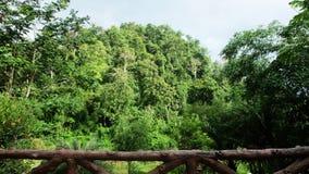 与阳光的热带雨林风景 免版税库存图片