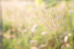 与阳光的草花 免版税库存照片