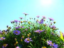 与阳光的紫色花 免版税库存照片