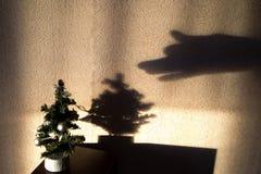 与阴影的微型圣诞树 免版税库存照片