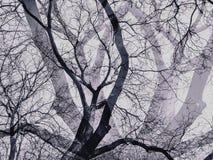 与阴影的死的树在黑白颜色 免版税图库摄影