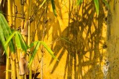 与阴影的竹子在黄色墙壁上 在墙壁上的焦点 免版税库存图片