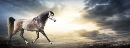 与阿拉伯马的横幅反对风雨如磐的天空背景  免版税库存照片