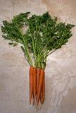 与附属的上面的新鲜的有机红萝卜 免版税库存照片