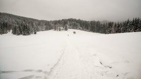 与附近被隔绝的树的积雪的背景的森林盖的供徒步旅行的小道和小山 免版税库存图片