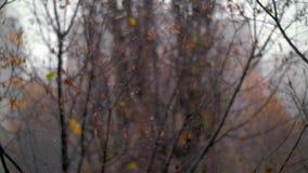 与降雪和退色的发辫的晚秋天场面 影视素材