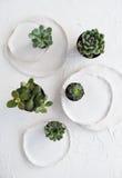 与陶瓷板材和绿色多汁植物的Minimalistic静物画 免版税库存图片