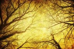 与难看的东西纹理的结构树顶层 免版税库存照片