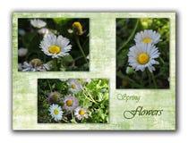 与雏菊和题字春天的拼贴画在绿色背景开花 库存照片