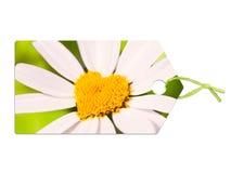 与雏菊的标签以心脏的形式 免版税库存图片