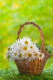 与雏菊的篮子 免版税库存图片