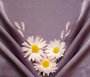 与雏菊的缎织品 免版税图库摄影