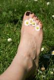与雏菊的脚在脚趾之间 库存照片