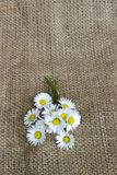 与雏菊的静物画 免版税图库摄影