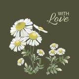 与雏菊花束的贺卡在黑暗的 春黄菊花 库存例证