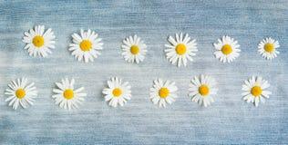 与雏菊花的葡萄酒花卉背景 免版税库存图片