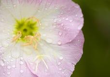 与雨下落的春天野花 库存图片
