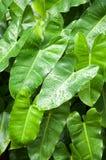与雨下落的热带掌状事假 库存图片