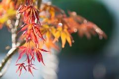 与雨下落的秋天五颜六色的叶子背景 库存图片