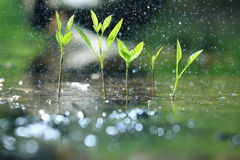 与雨下落的草 免版税库存图片