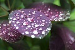 与雨下落的紫色事假 免版税库存图片