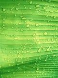 与雨下落的绿色叶子纹理 抽象bac的新自然 免版税图库摄影