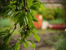 与雨下落的绿色叶子 免版税库存图片
