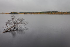 与雨在湖和残破的树的黑暗的云彩在秋天的水中 免版税库存图片