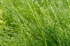 与雨小珠的长的草  免版税库存图片