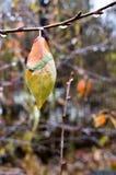 与雨的五颜六色的秋叶在分支,宏指令滴下 库存图片