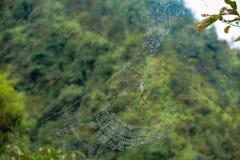 与雨的Spidernet滴下, Sapa,北越南 免版税库存图片